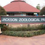 #10. The cast of Madagascar--A Musical Adventure enjoyed their trip to the Jackson Zoological Park!